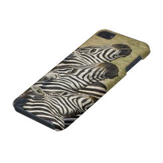 Burchelli's Zebra, Equus burchellii, Masai Mara, 4 iPod Touch (5th Generation) Covers