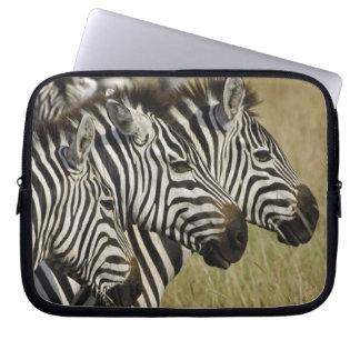 Burchelli's Zebra, Equus burchellii, Masai Mara, 4 Laptop Sleeve