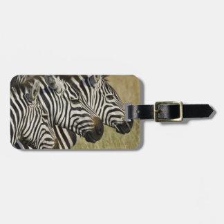 Burchelli's Zebra, Equus burchellii, Masai Mara, 4 Travel Bag Tag
