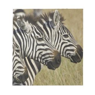 Burchelli's Zebra, Equus burchellii, Masai Mara, 4 Memo Pad