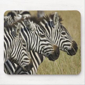 Burchelli's Zebra, Equus burchellii, Masai Mara, 4 Mouse Pad