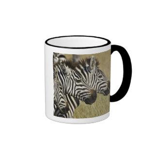 Burchelli's Zebra, Equus burchellii, Masai Mara, 4 Coffee Mug
