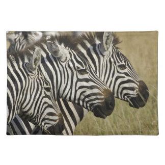Burchelli's Zebra, Equus burchellii, Masai Mara, 4 Placemat