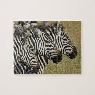 Burchelli's Zebra, Equus burchellii, Masai Mara, 4 Jigsaw Puzzles