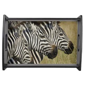 Burchelli's Zebra, Equus burchellii, Masai Mara, 4 Serving Tray