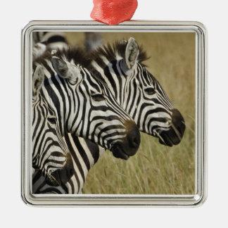 Burchelli's Zebra, Equus burchellii, Masai Mara, 4 Silver-Colored Square Decoration