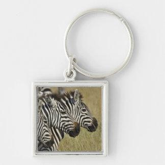 Burchelli's Zebra, Equus burchellii, Masai Mara, 4 Silver-Colored Square Key Ring