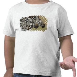 Burchelli's Zebra, Equus burchellii, Masai Mara, 4 Shirts