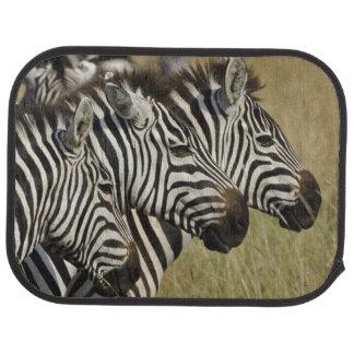 Burchelli's Zebra, Equus burchellii, Masai Mara, 4 Car Mat