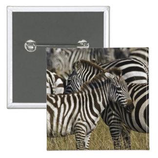 Burchelli's Zebra, Equus burchellii, Masai Mara, Pinback Button