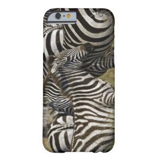 Burchelli's Zebra, Equus burchellii, Masai Mara, Barely There iPhone 6 Case