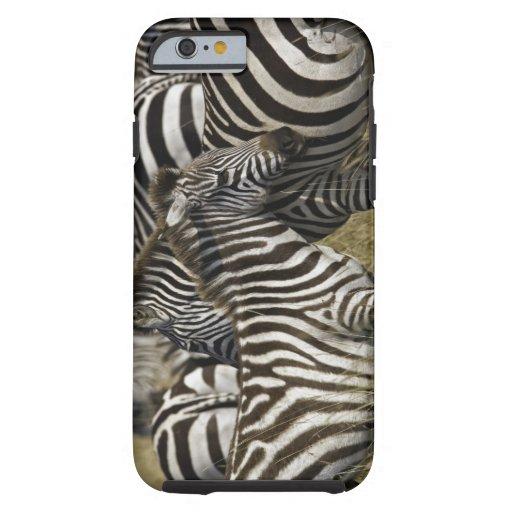 Burchelli's Zebra, Equus burchellii, Masai Mara, iPhone 6 Case