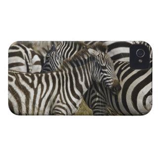 Burchelli's Zebra, Equus burchellii, Masai Mara, Case-Mate iPhone 4 Cases