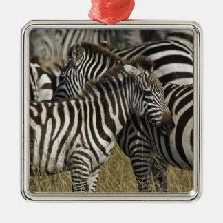 Burchelli's Zebra, Equus burchellii, Masai Mara, Christmas Ornament
