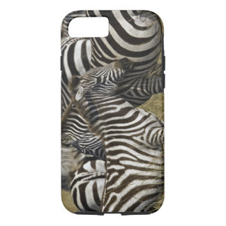 Burchelli's Zebra, Equus burchellii, Masai Mara, iPhone 8/7 Case