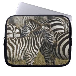 Burchelli's Zebra, Equus burchellii, Masai Mara, Laptop Sleeve