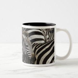 Burchelli's Zebra, Equus burchellii, Masai Mara, Coffee Mugs