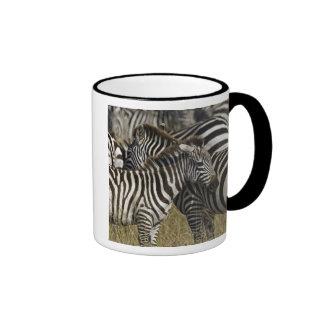 Burchelli's Zebra, Equus burchellii, Masai Mara, Mugs