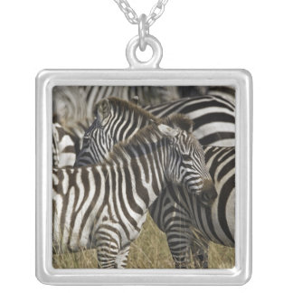 Burchelli's Zebra, Equus burchellii, Masai Mara, Silver Plated Necklace
