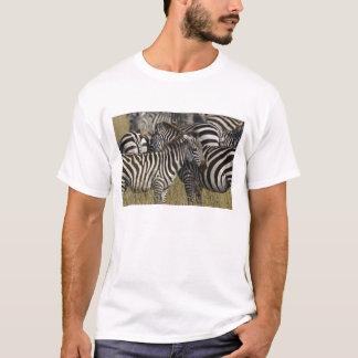 Burchelli's Zebra, Equus burchellii, Masai Mara, T-Shirt