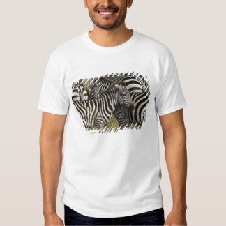 Burchelli's Zebra, Equus burchellii, Masai Mara, T Shirts