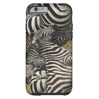 Burchelli's Zebra, Equus burchellii, Masai Mara, Tough iPhone 6 Case