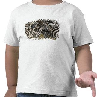 Burchelli's Zebra, Equus burchellii, Masai Mara, T Shirt