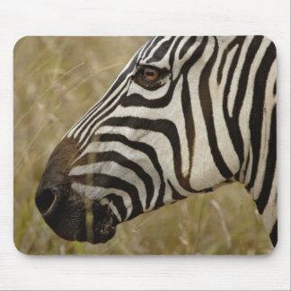 Burchelli's Zebra, Equus burchellii, Masai Mousepads