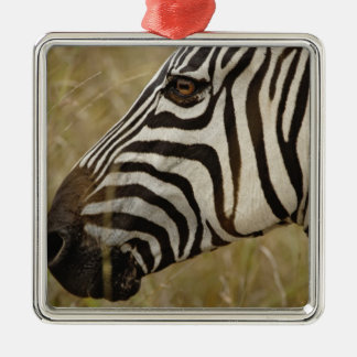 Burchelli's Zebra, Equus burchellii, Masai Silver-Colored Square Decoration