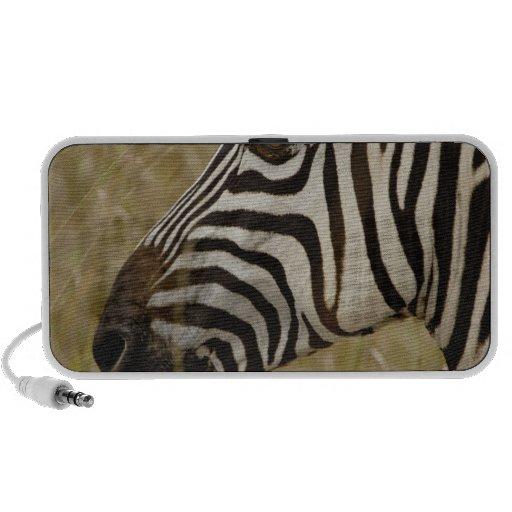 Burchelli's Zebra, Equus burchellii, Masai Laptop Speakers