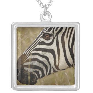 Burchelli's Zebra, Equus burchellii, Masai Square Pendant Necklace