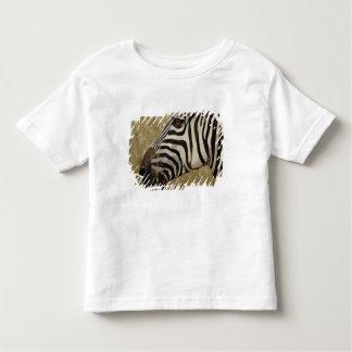 Burchelli's Zebra, Equus burchellii, Masai Tee Shirts