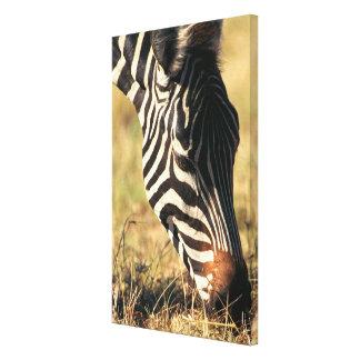Burchell's zebra canvas print