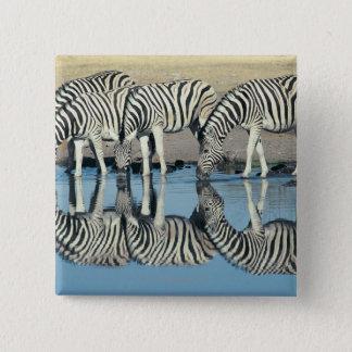 Burchells Zebra (Equus burchelli) 15 Cm Square Badge