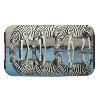 Burchells Zebra (Equus burchelli) Tough iPhone 3 Case