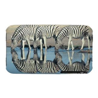 Burchells Zebra (Equus burchelli) iPhone 3 Case-Mate Cases