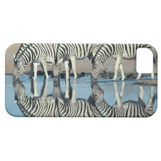 Burchells Zebra (Equus burchelli) drinking at Barely There iPhone 5 Case