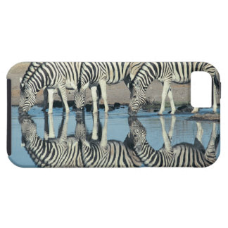 Burchells Zebra (Equus burchelli) drinking at iPhone 5 Cases