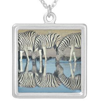 Burchells Zebra (Equus burchelli) drinking at Silver Plated Necklace