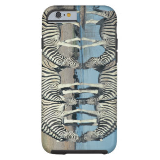 Burchells Zebra (Equus burchelli) drinking at Tough iPhone 6 Case