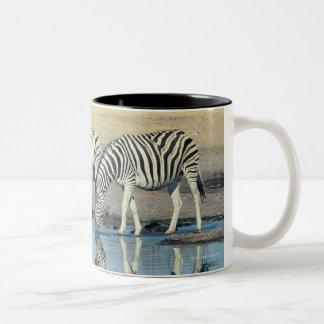 Burchells Zebra (Equus burchelli) drinking at Two-Tone Coffee Mug