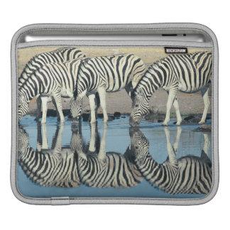 Burchells Zebra (Equus burchelli) iPad Sleeves