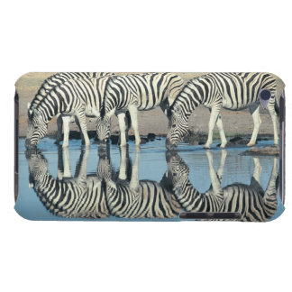 Burchells Zebra (Equus burchelli) iPod Touch Cases