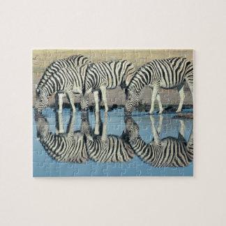 Burchells Zebra (Equus burchelli) Jigsaw Puzzle