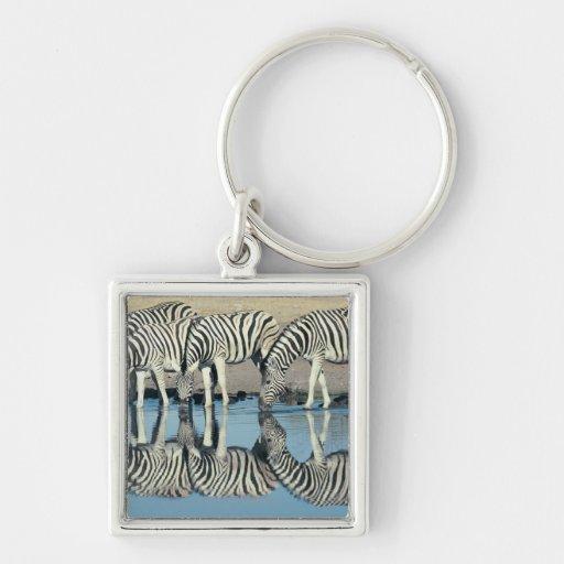 Burchells Zebra (Equus burchelli) Keychains