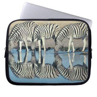 Burchells Zebra (Equus burchelli) Laptop Sleeves