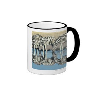 Burchells Zebra (Equus burchelli) Coffee Mug