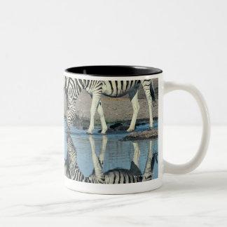 Burchells Zebra (Equus burchelli) Mug