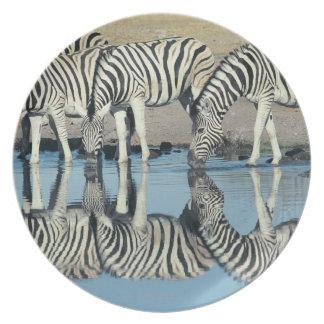 Burchells Zebra (Equus burchelli) Plates