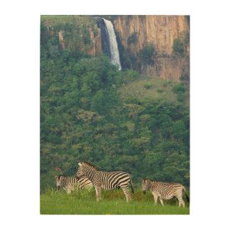 Burchell's Zebra (Equus Burchellii) Herd Wood Canvases